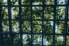 Through the pergola garden covered with green foliage and backli Stock Photos