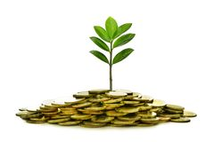 Image of pile of coins with plant on top for business, saving, growth, economic concept. On white background stock images