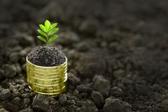 Pile of coins with plant on top. Image of pile of coins with plant on top for business, saving, growth, economic concept royalty free stock photo