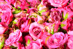 Image of pink roses Royalty Free Stock Photo