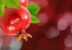 Image of a pomegranate on a branch close up royalty free stock photos