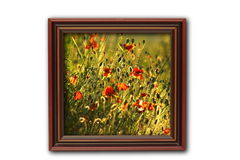 Image with poppies on wood frame Royalty Free Stock Photography