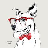 Image Portrait bulldog in the cravat and with glasses. Vector illustration.