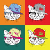 Image Portrait of a cat in a baseball cap with glasses. Pop art style vector illustration. Stock Photography
