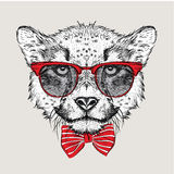 Image Portrait cheetah in the cravat and with glasses. Vector illustration. Stock Images