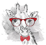 Image Portrait giraffe in the cravat and with glasses. Hand draw vector illustration. Stock Photos