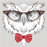 Image Portrait owl in the glasses and cravat. Stock Photography