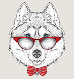 Image Portrait panda in the cravat and with glasses. Hand draw vector illustration. Royalty Free Stock Photos