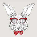 Image Portrait rabbit in the cravat and with glasses. Hand draw vector illustration. Stock Photography