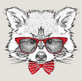Image Portrait raccoon in the cravat and with glasses. Hand draw vector illustration. Royalty Free Stock Photo