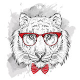 Image Portrait tiger in the cravat and with glasses. Hand draw vector illustration. Stock Image