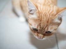 Image prise par chat de gingembre d'en haut photo libre de droits