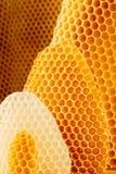 image proche de nid d'abeilles de fond vers le haut Photos stock