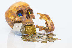 Image of psychology of investing concept. Human skull with dices and money coins on white background. Representing overconfident investor often leading Royalty Free Stock Image