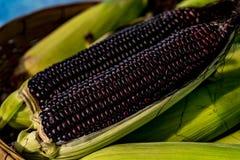Image of Purple corn. Closeup image of Purple corn Royalty Free Stock Images
