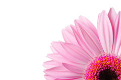 Image of a quarter of a Gerbera daisy Royalty Free Stock Images