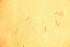 Image réelle de microscope Image stock