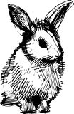 Image of a rabbit with long ears Royalty Free Stock Image