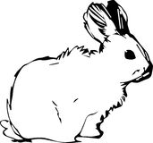 A image of a rabbit with long ears. Image of a rabbit with long ears stock illustration