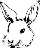 A image of a rabbit with long ears Royalty Free Stock Image