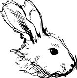 A image of a rabbit with long ears Royalty Free Stock Photo
