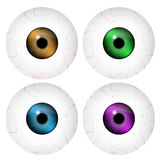 Image of realistic human eye ball with colorful pupil, iris. Vector illustration  on white background. Royalty Free Stock Photography