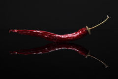Image of red hot pepper on black background with reflection. Closeup image of dried red hot chili pepper on black background with reflection Stock Photography