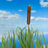 Image of reeds against the water and sky background Stock Photos
