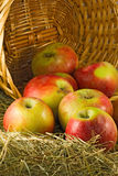 Image of  ripe apples in a basket close up Stock Photography