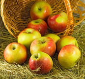 Image of  ripe apples in a basket closeup Royalty Free Stock Photography