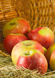 Image of ripe apples in inverted basket closeup Royalty Free Stock Photos