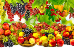 Image of  ripe fruits close-up Stock Images