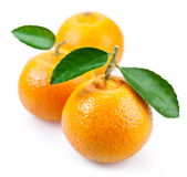 Image of a ripe tangerine with leaves. On white background Royalty Free Stock Images