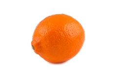 Image of ripen orange minneola Royalty Free Stock Image