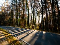 Image of road in the forest with lights and shadows stock image