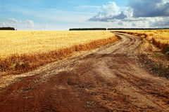 Image of road in wheat field against blue sky Stock Images
