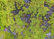 Mossy rock Stock Image