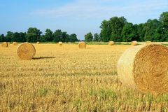An image of rolls of straw. With stork Stock Image