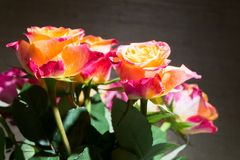 Close-up of festive fresh roses with original yellow and crimson coloration. stock photo