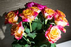 Close-up of festive fresh roses with original yellow and crimson coloration. stock image