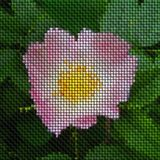 Image rose bloom knit generated texture Stock Image