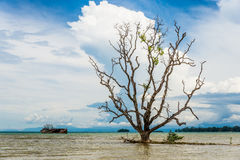 Image of ruin fishing boat and old big tree in Thailand Royalty Free Stock Photo