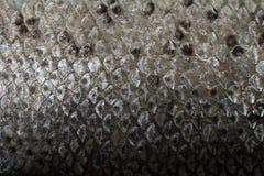 Échelles de poissons Image libre de droits