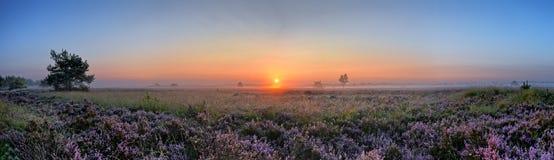Image scénique de lever de soleil au-dessus de bruyère rose de floraison Photographie stock