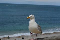 Sea gull on the beach Royalty Free Stock Photos