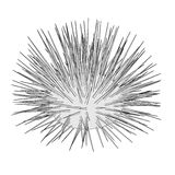 Image of sea urchin. Cartoon image of sea urchin Stock Images