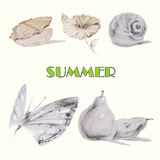 Image of seashell, flower, snail, butterflie and pear Royalty Free Stock Photos
