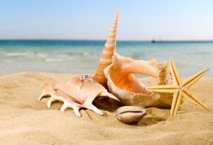 image of seashells on the sand against the sky close-up stock photo