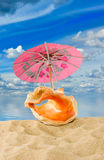 Image of seashells on sea background close-up Royalty Free Stock Images