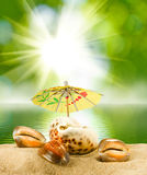 Image of seashells on sea background closeup Stock Photography